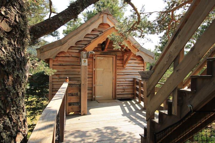 Cabane Le Nid des Hirondelles - Caille - Blockhütte