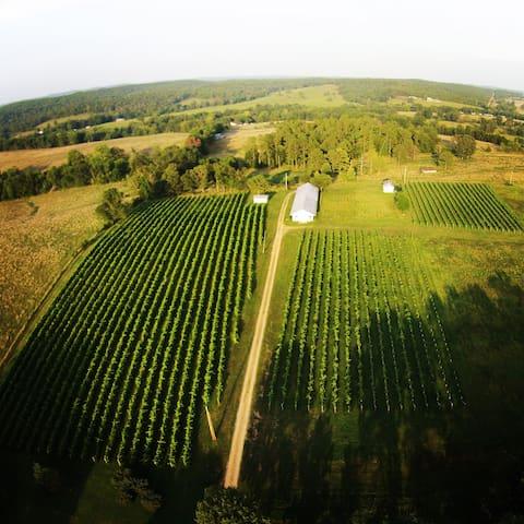 The Vineyards at Edg-Clif Farms & Vineyard
