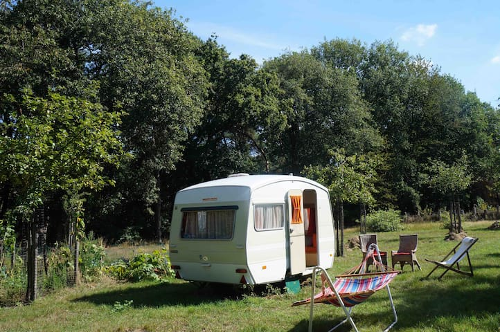 Cozy retro caravan surrounded by beautiful Nature*