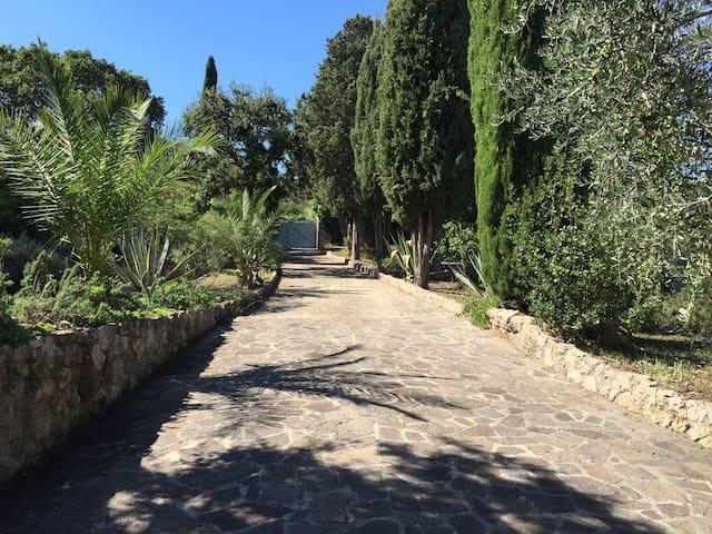 Viale di accesso alla Villa