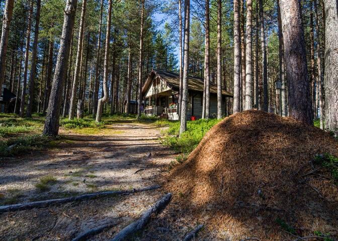 Hirsimökki Saunavaara - Finland