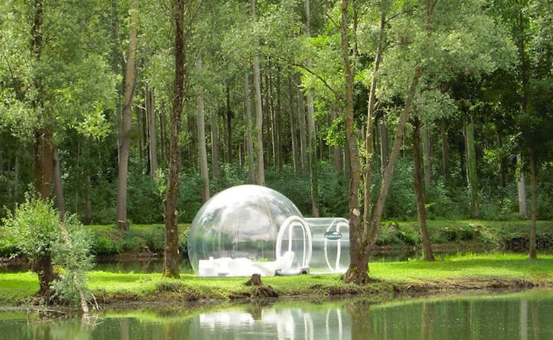 BubbleFever