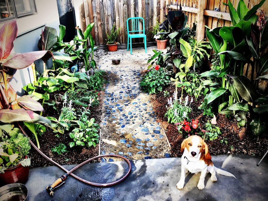 Tropical back courtyard with cute puppy Buno