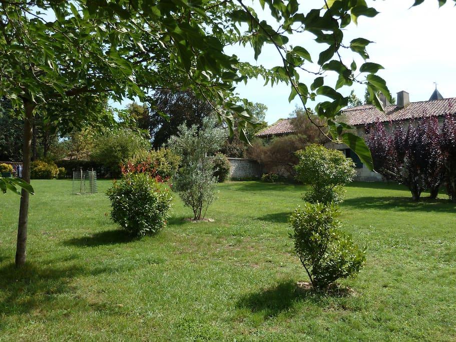 A spacious garden