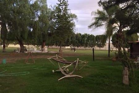 Praderas del Rock, Jumper horses in - Celaya
