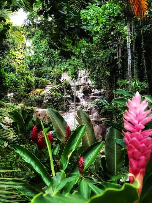 Fruta Villa is located next door to the breathtaking Konoko Falls