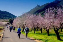Walking and Hiking is very popular in the Jalon Valley and around Alcalali. With routes suitable for all ages and abilities. Plenty to follow by yourself or groups to join if you prefer.