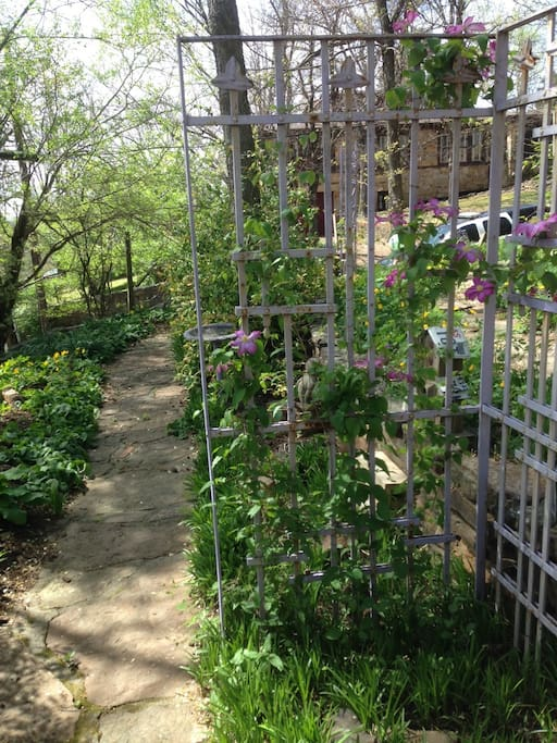 Garden path  Blooming Clematis