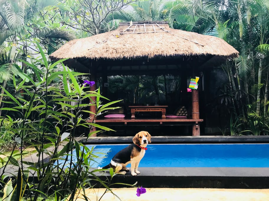 private bedroom in balinese villa w pool joglo villen zur miete in kuta bali indonesien. Black Bedroom Furniture Sets. Home Design Ideas