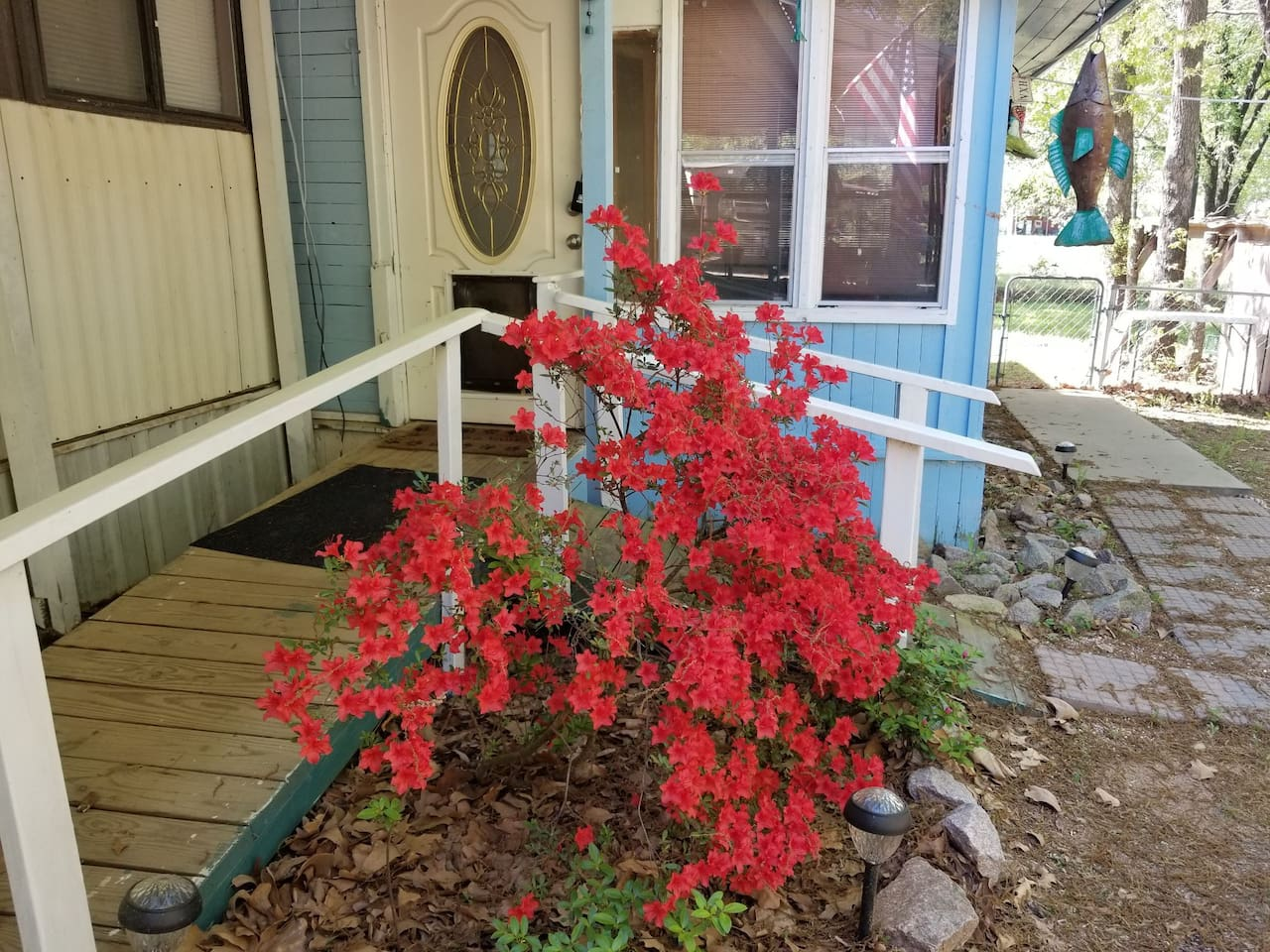 Azaleas are in bloom in the Spring. We just love this blaze red color. Our place is cozy, clean, and all you need.