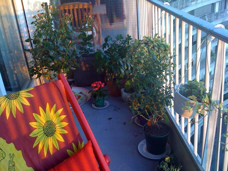 balcon sans viv à vis