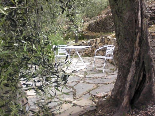 ulivi di Santa Lucia piano 1 - Diano Castello - Appartamento