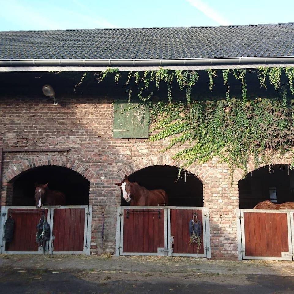 Apartment auf dem Bauernhof mit Pferden und Rindern.