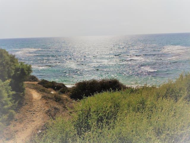 Jaffa on the beach