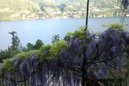 Giardino di iris e ulivi sul lago - Laglio