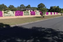 One of the gardens on the nearby walk along Stubbin St.