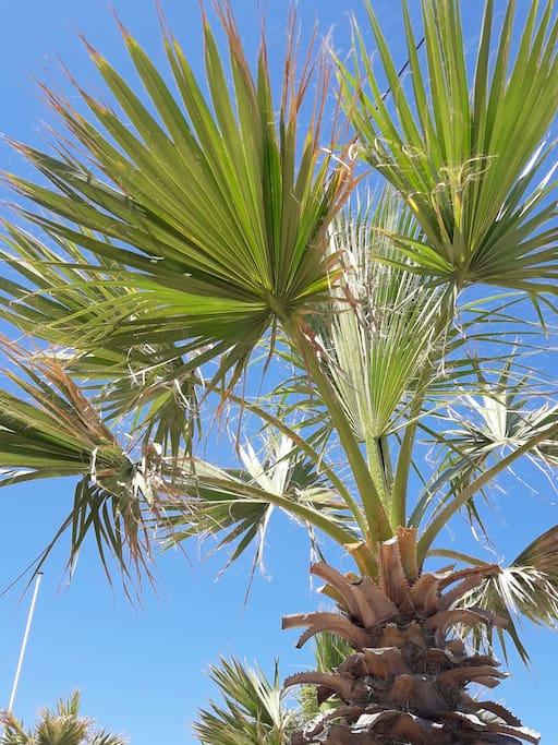 ville agréable ornée de nombreux palmiers!