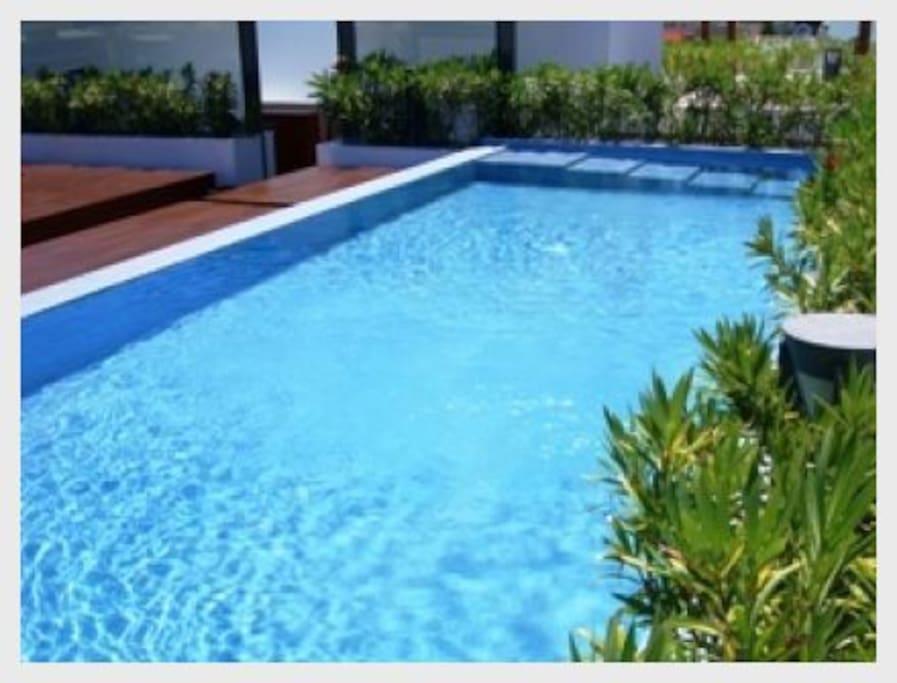 Pool, Water, Resort, Swimming Pool, Palm Tree