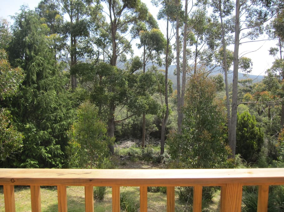 View from Deck looking at the bush