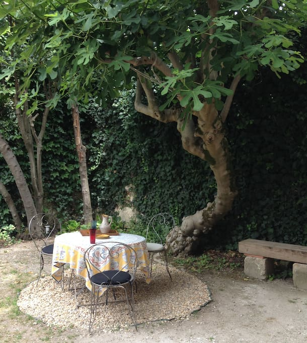 the place under the fig tree to take a drink