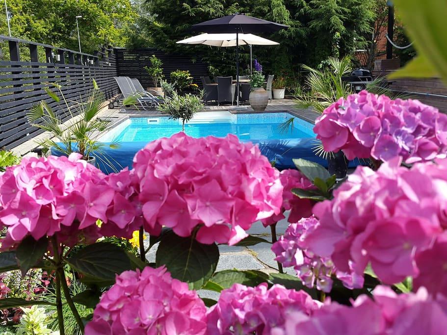 Generös pool med gott om utemöbler och solstolar.