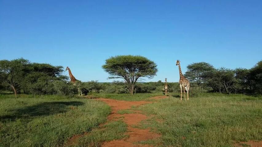 Groot Geluk - Kudu Chalet