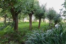 Van VlotenHofstee in groene omgeving