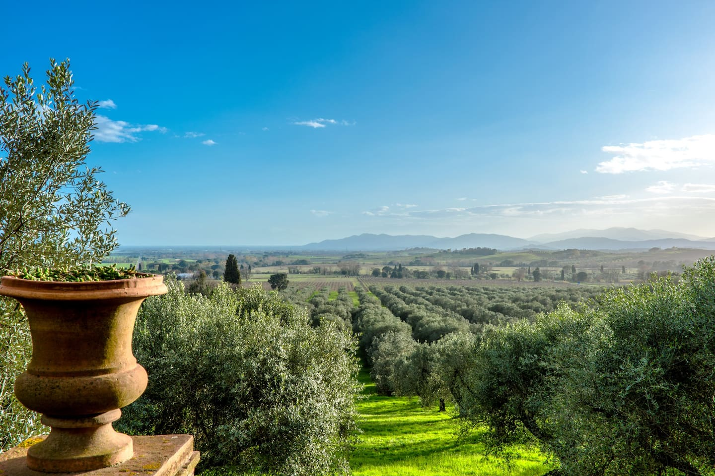 Panoramic view from the garden terrace toward the centenary organic olive orchard