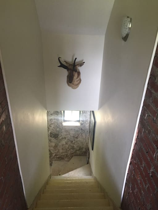 The view down the stairs with a prong horned antelope looking on… lots of exposed stone and brick