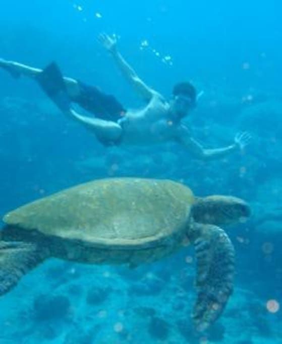 Swimming with sea turtles! That's me!