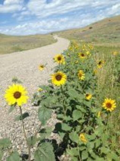 wildflowers on road