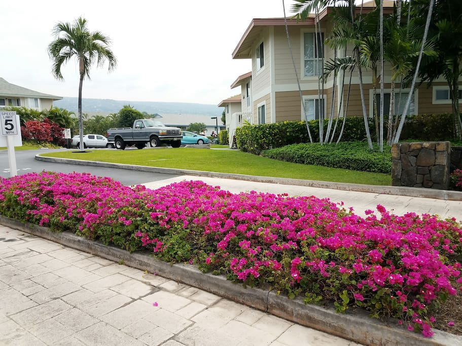Drive way leads to Alii Lani vacation rental