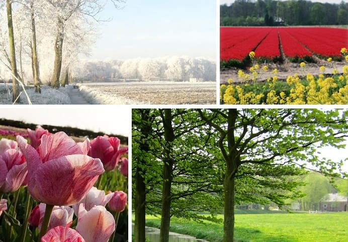 Some of the Castles and Country Estates - in and around IJmuiden - built in the 17th century, are still surrounded by small bulb fields from the same aera. In spring - end of March, April untill half May - you can admire the stunning beautiful COLORFUL FLOWERING BULB FIELDS fields, at just 10 - 20 minutes by car (as well south and north from the Cottage)