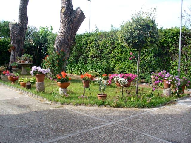 VILLINO I DUE PINI - ladispoli - Villa