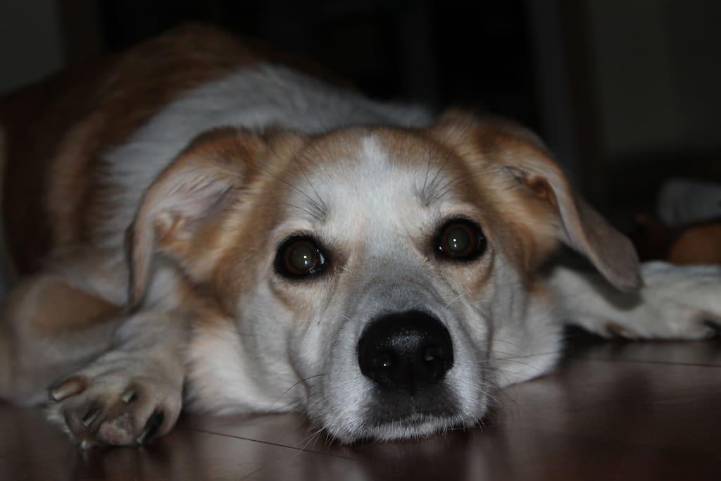 Our friendly dog Laika