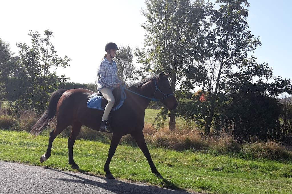 Horse riding available (pre booked)