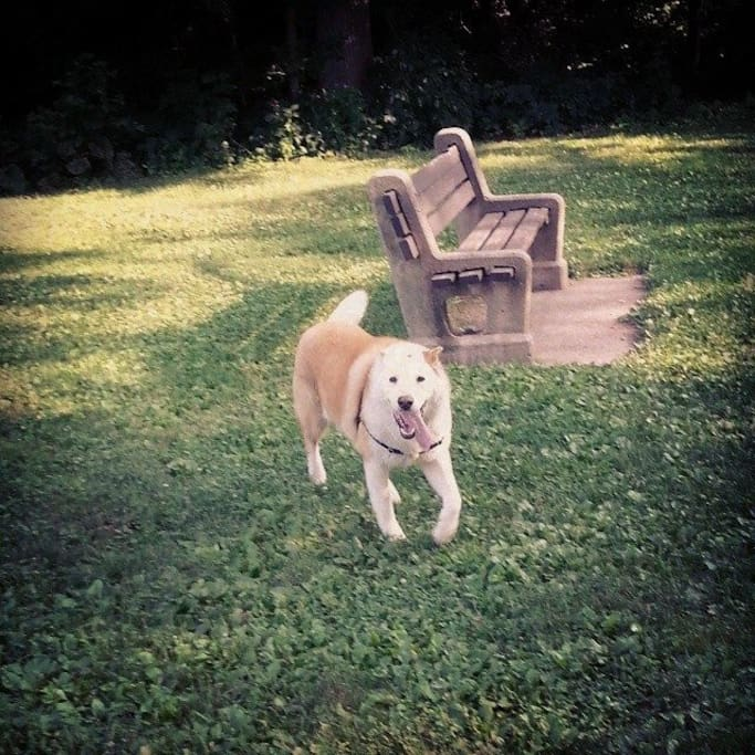 This is the fabulous pooch on the property at the park down the street.  She's an angel.