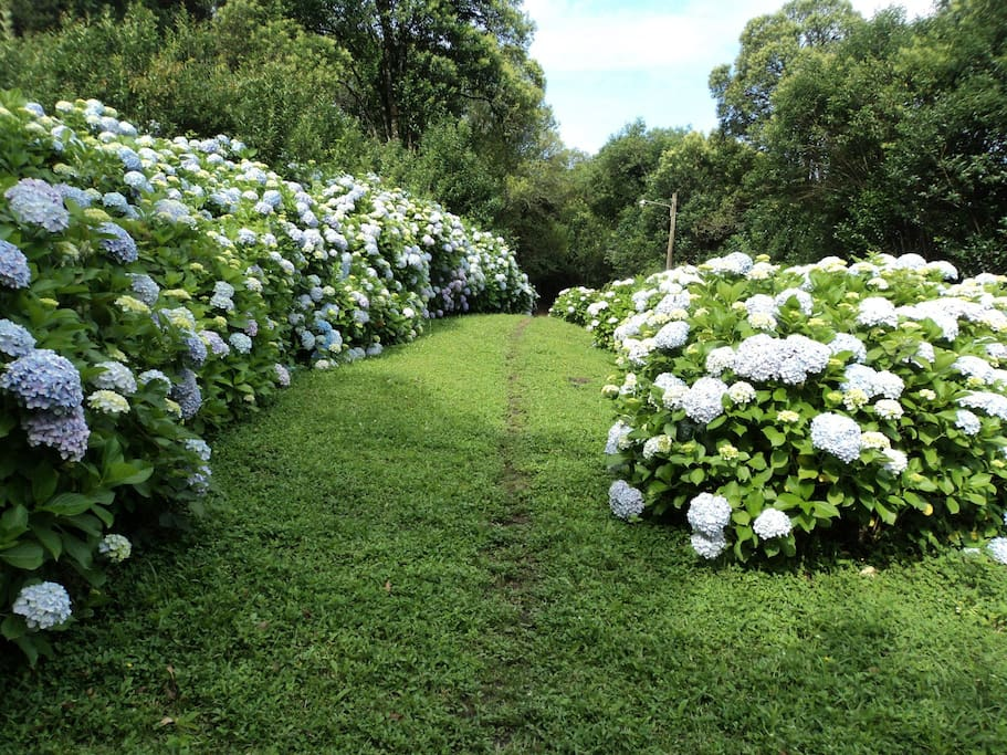 Antiguamente se cultivaban flores para su venta por lo que se ven por todos lados