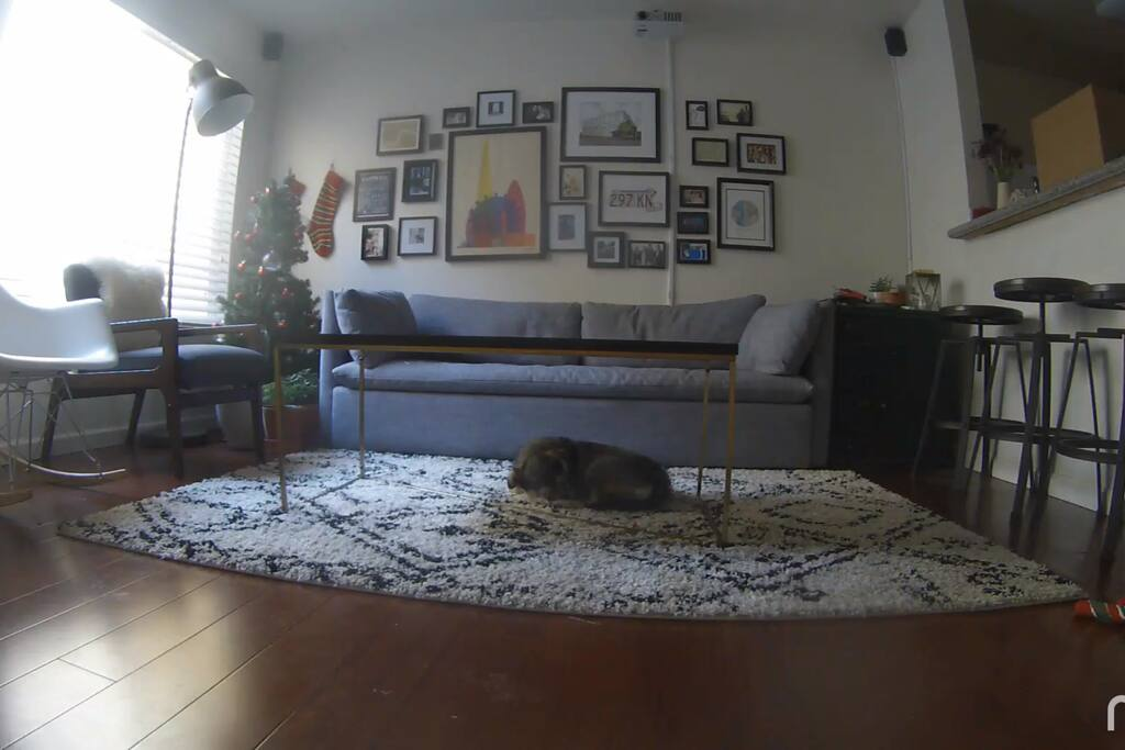 Cozy living room with lot of seating (dog not included).