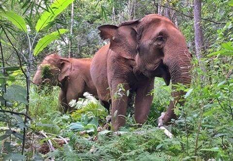walk with the elephants stay in our 5 star cottage
