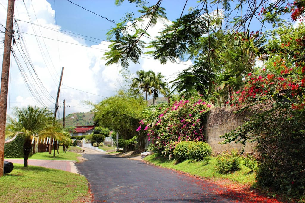 This is the view outside our home. We are in a quiet safe residential area, a short walk to Dance JA and all the shops and restaurants. Bus runs at the end of the street taking you to UWI, UTECH, or the other way to downtown Kingston.