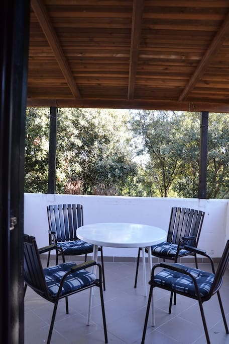 Terrace overlooking the pine forest