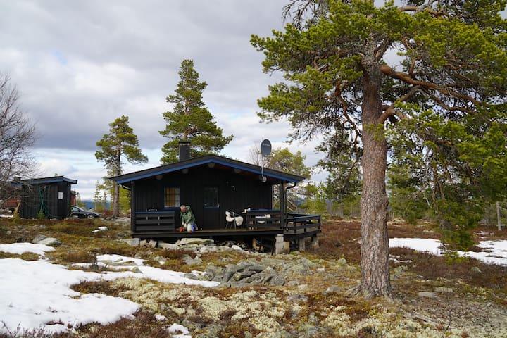 Liten koselig hytte, med flott beliggenhet.
