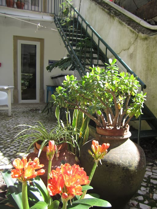 Patio covered with Portuguese traditional sidewalk. Lots of green!