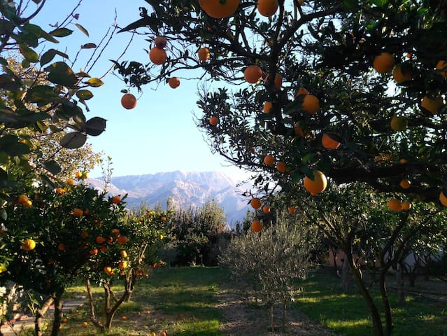 Mandarin & Orange Orchard Home