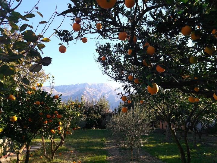Mandarin & Orange Orchard Home