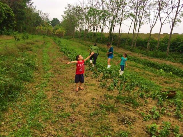 Mama'sfarmstay Vietnam - Rumah