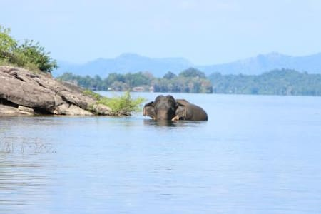 Swimming Elephants and Hotel Rooms by Gal Oya Park