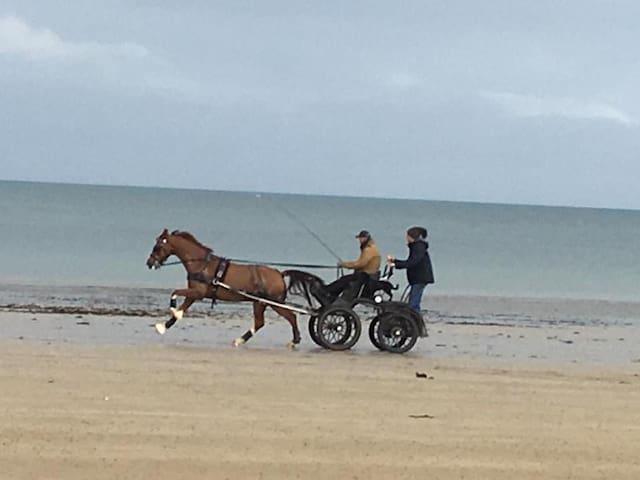 Nous pouvons vous proposer des promenades en attelage sur la plage, avec nos chevaux.