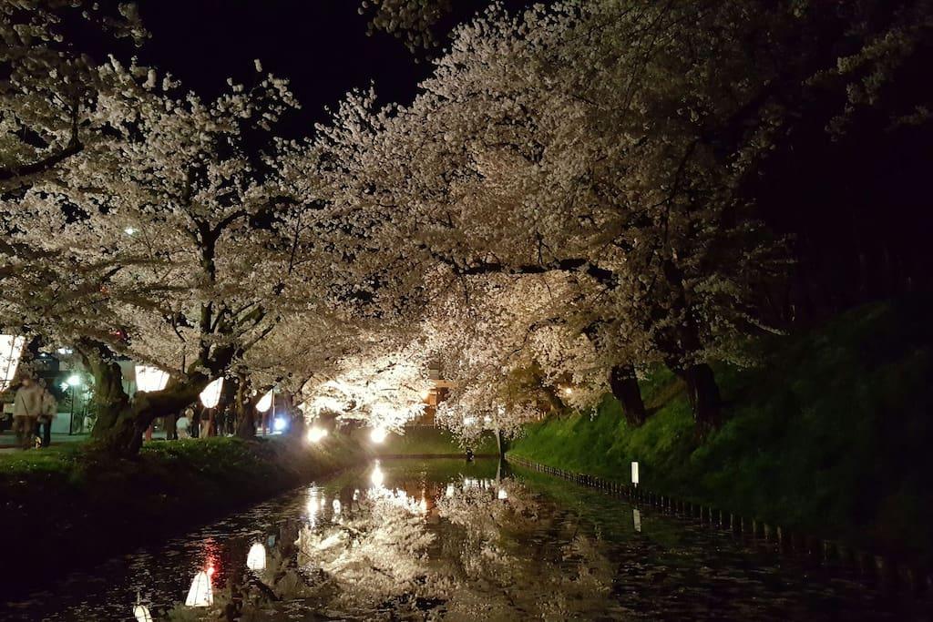 Hirosaki Park during the Cherry Blossom Festival